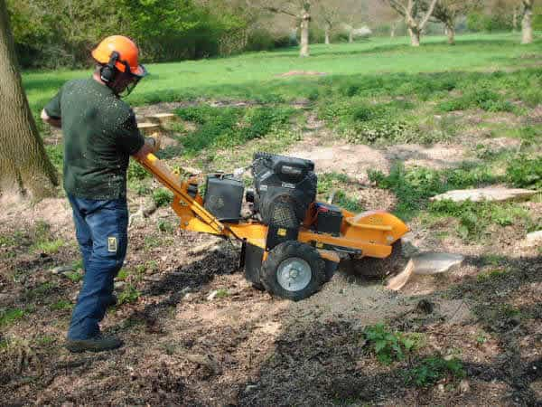 Stump grinding stage 2